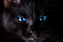 "Black Cats, Black Crows & Black of Night... / Favorite ""Black"" things"
