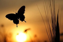 Butterflys and bugs / by Debby Elmer