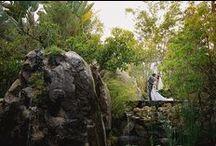 Paradise Falls / by Miriam Corona Events