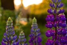 Garden / by Megan Brandley
