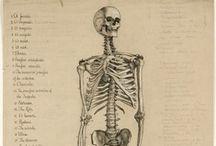 medical diagrams / by Natacha Thies