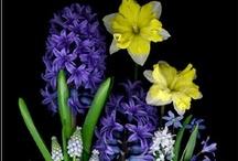 Floral / by Drika Drikolina