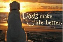 Animals Make Life Better / by Amber Caudle