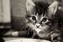 Cute & Cuddly / by Amberly Johnson