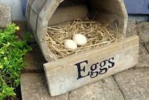 Egg-citing  / by Diane Gonzalez