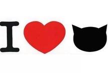 Cats ♥ / Gatos, Katzen, Chat, Gatto,кошка, katt, Neko. No importa lo que digan de ellos, yo los adoro y los amo más que a mi misma. They make me so happy :) I want one so bad!!! Miau ♥ >^..^< ♥  / by Isabel Acevedo