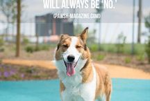 Dog Quotes | Posh Pets® + Pawsh Magazine Collaboration / A collaboration between Pawsh Magazine (words) and Posh Pets Photography (imagery).  All of the animals featured in this series are former adoptables who found their forever homes!