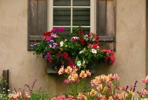 Windows / by Theda Weatherly