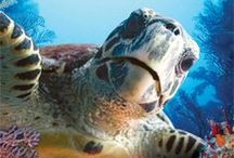 I Love Sea Turtles / Sea Turtles / by Sunny Smith