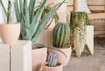Green / green thumb, green, how to grow, plants, planter, diy planters, succulents, cactus, floral arrangements, fiddle leaf figs