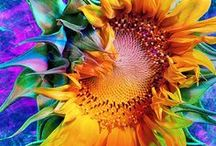 Wow!.....Sunflowers / Flowers / by Sunny Smith