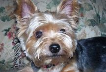Our Sweet Little Boy / Pets / by Sunny Smith
