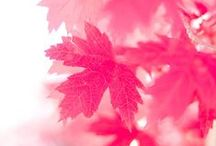All Things Hot Pink / by Connie Perteet