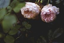 moodboard belle flora / dark staged flowers