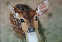 ◆ Oh my deer ◆