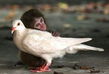 Love is a wonderful thing (Sigh) / Lovely moments. Cuddles, hugs, tender moments, happiness and joy