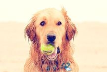 Cute Canines / Adorable dogs // man's best friend // cute animals