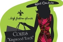Lady Couture Tags / Lady Couture is everywhere! She is usually always dressed for the occasion too! / by Hort Couture