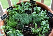 Herbs / by Brenda Cauley Terbush