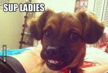 Animals 'R Funny