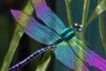 Dragonfly's ♥