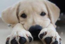 Puppy! / by Megan Mitchell