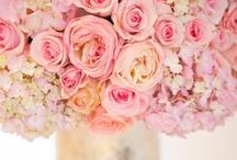 Wedding! / by Jamie Eason (Middleton)
