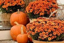 Fall / All things to celebrate a Midwest Fall. Pumpkins, Pie, Decor and more.