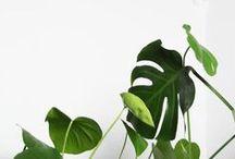 ! go green organic ! / by Studio Jet!