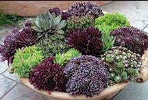 GARDEN*Succulents* / by Anna Eberhart