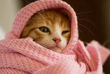 All About Cats / by ❤♰ℳᏋℓ!ѕѕᎯ K BяᏋηηᏋя♰❤