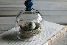CLOCHE / A way to display seasonal items, food, or a favorite something that holds a lot of memories - all under glass. / by Brenda Clayton