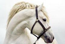 Equine / Beautiful horses of every breed. / by Debra Alexander