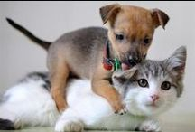 Pet Insurance / Pet insurance information and news for dog and cat owners.