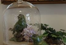 Under the Looking GLASS / This board features apothecary jars and cloche…pretty things displayed under glass.