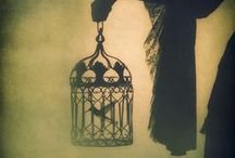 bird cage / by Sweet Rose