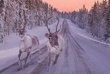 Finland / by Visit Scandinavia