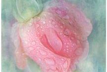 Pretty N Pink / by Lynn Leone