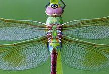 dragonfly / by nurks