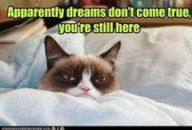 Grumpy Cat / by Kay Johnson