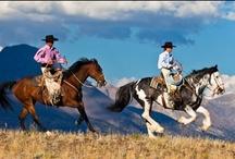 В света на конете / http://horses-bg.net