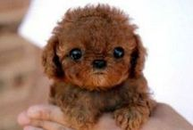 Cute Animals / We want to snuggle them all.