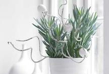 Kamerplanten - Pots & Plants