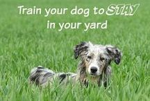Dog Training Tips & Tricks / Useful tips and hacks for training your dog.