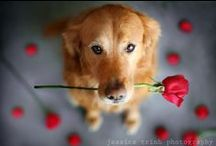 Cute Valentine's Day Dogs