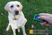 Consejos Adiestramiento y Salud / Consejos y trucos sobre cómo educar a un perro y cuidarle para tener una convivencia feliz.  #adiestramientocanino #Educarperro #adiestramiento #educacioncanina #adiestramientoenpositivo