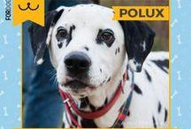 """Adopciones de perros - Estrella Solidaria / Preciosos perros en adopción que difundimos en ForDOGever gracias a la campaña """"Estrella Solidaria - Hazle brillar"""" #adopta #adopcion #perros"""