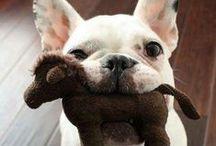 Frases perrunas y citas / Las mejores frases para amantes de perros #frases #perros
