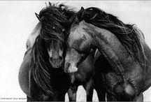 Equus Love