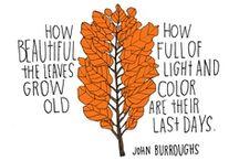 Fall :: Autumn.